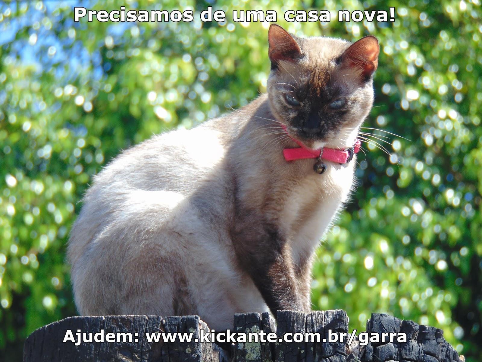 a067c2fb30ce5 G.A.R.R.A. - Grupo de Ação, Resgate e Reabilitação Animal  Janeiro 2019