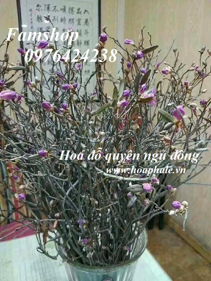 Hoa do quyen ngu dong tai Ba Vi