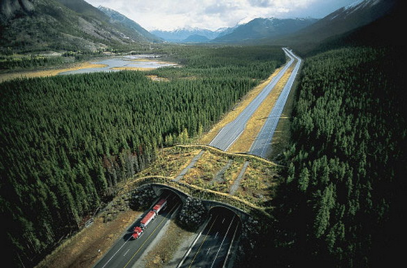 Wildlife overpass, Wildlife overpasses, Wildlife overpasses around the world in pictures, Wildlife overpasses pictures, Wildlife overpasses photos, Wildlife overpasses images, wildlife crossing, green bridges, ecoducts, wildlife crossing structures