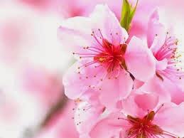 Sudut Jari 10 Bunga Tercantik Di Dunia
