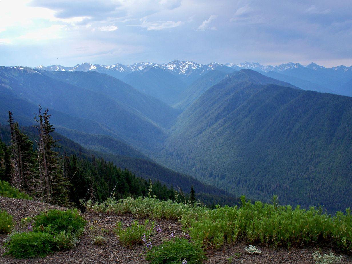 Random Images From A Nightowl Olympic Peninsula Washington State