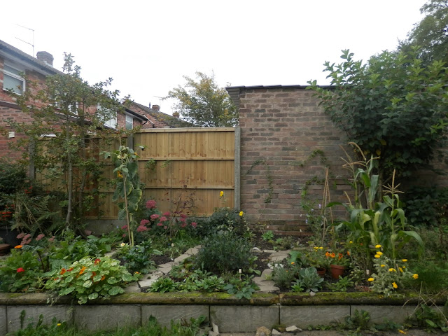 Garden, September 2015.  secondhandsusie.blogpsot.co.uk #autumngarden #ukgarden #growyourown #ukblogger