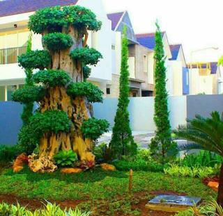 taman dengan bonsai dolar besar