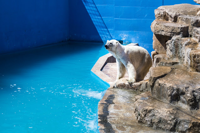 oso-polar-zoo-safari-fasano