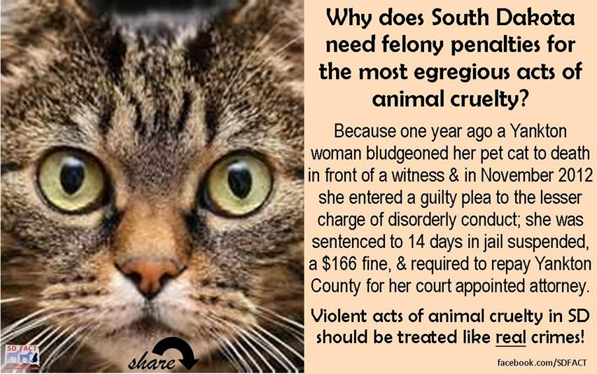 Fighting A Speeding Ticket >> SDFACT South Dakotans Fighting Animal Cruelty Together ...