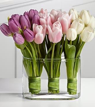 Resultado de imagem para tulipas em vasos em casa