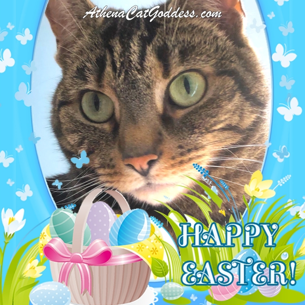 cat Easter card