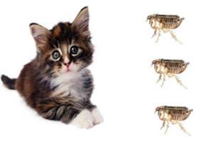 Resultado de imagen de sin parasitos gatos