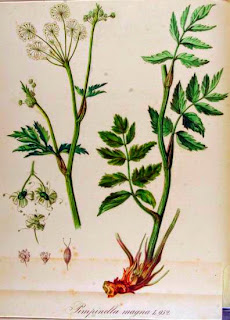 Fichas de Plantas Medicinales ADE