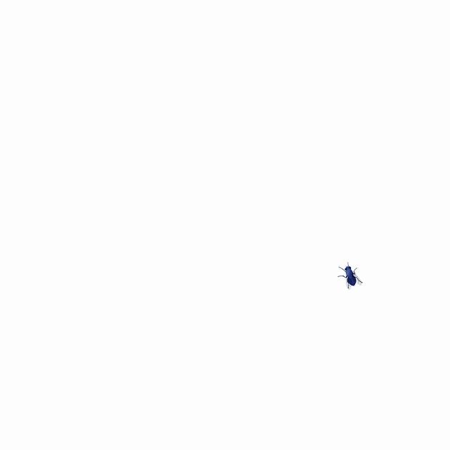 azulejo, ceramica azul, mosca