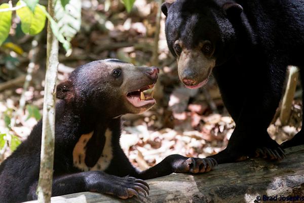 Indignación ante el vídeo de estos osos esqueléticos