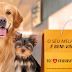 Shopping Del Rey se torna Pet Friendly e promove evento de adoção