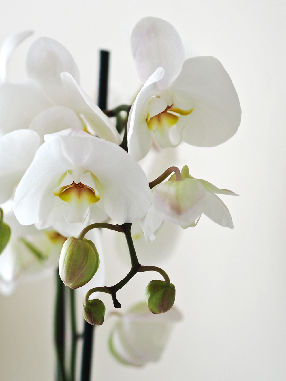 Orchid Styling Session – There's an Orchid for Every Interior