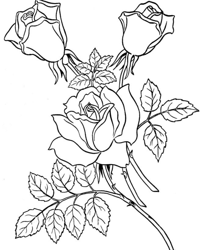 Gambar Mewarnai Bunga Mawar Terbaru Gambarcoloring
