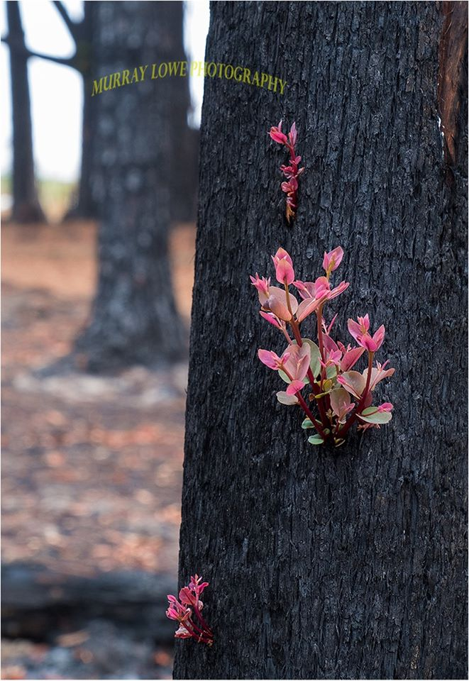 Heartwarming Pictures Of Plants Regrowing In Australia In Regions Devastated By The Blaze