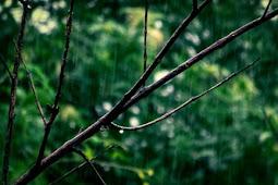 Daftar Isi Novel Tidur Bersama Hujan