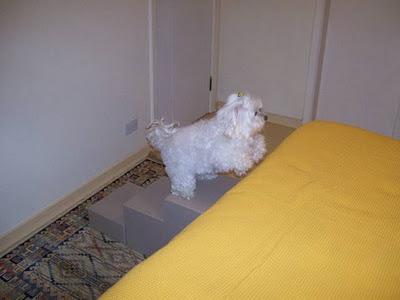 cães na cama box escada em perpendicular a cama