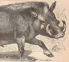 good luck charm boar