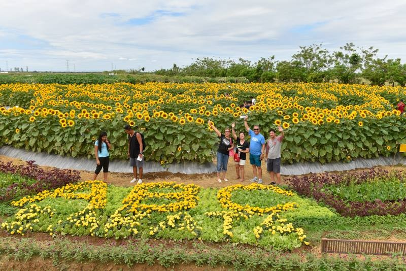 Sunflowers: Philippines