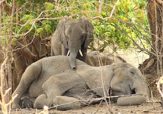 where do the asian elephants sleep jpg 1152x768