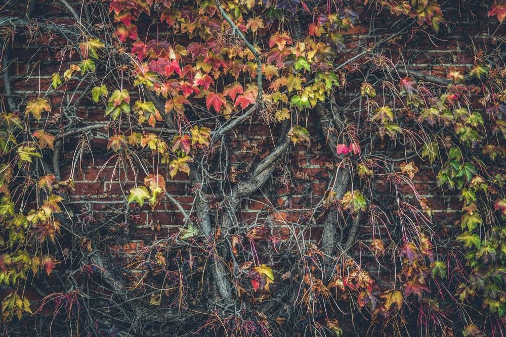 Дерево. Кадр сделан на объектив Samyang AF 35mm f/2.8 FE