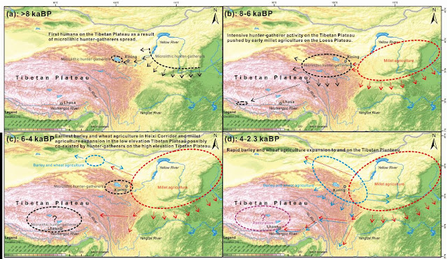 How did prehistoric humans occupy the Tibetan Plateau?