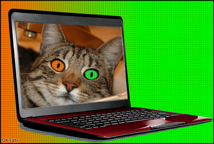 Photoshopped Cat picture • Funny cat with two different eye colors (related to the background)