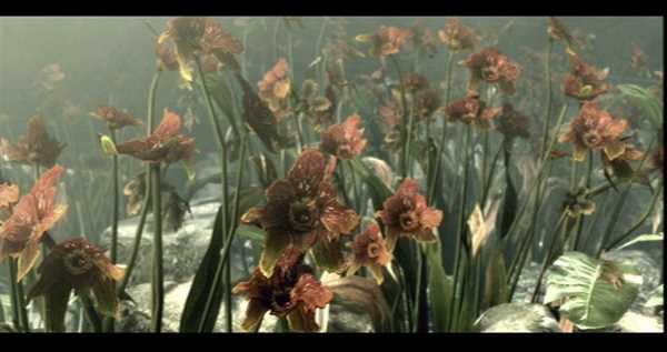 Flores de las que se extrae el virus madre de Resident Evil