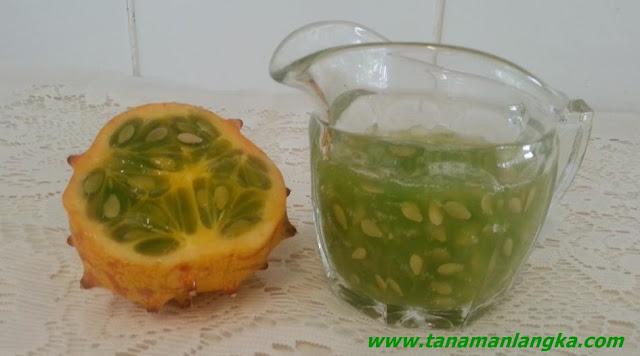 Manfaat Konsumsi Kiwano Fruit