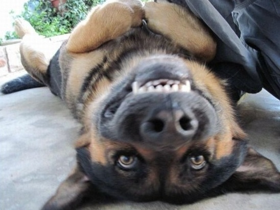 Funny Animals: 20 Animals making funny faces   Amazing Creatures