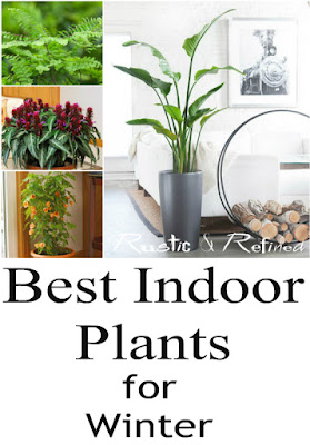 Best Plants to grow inside