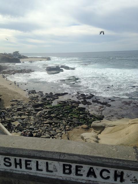 Shell Beach Tide Pools In La Jolla