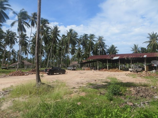 Кокосовая ферма