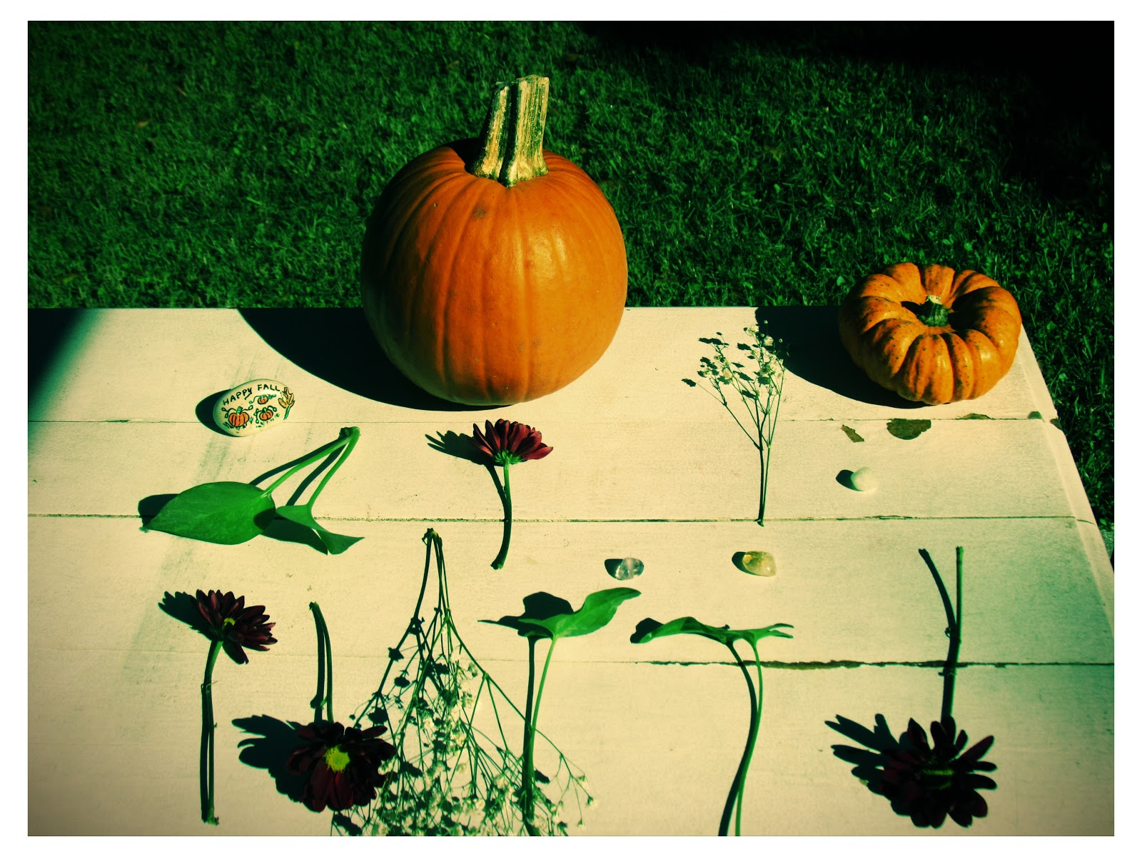 Lomo Art Photography With Pumpkins and Flowers
