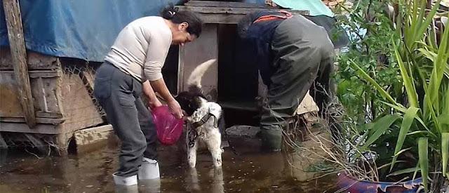Απεγκλωβισμός σκυλιών στο Άργος λόγω πλημμύρας