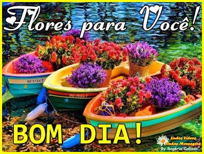 Flores para você! Bom Dia!