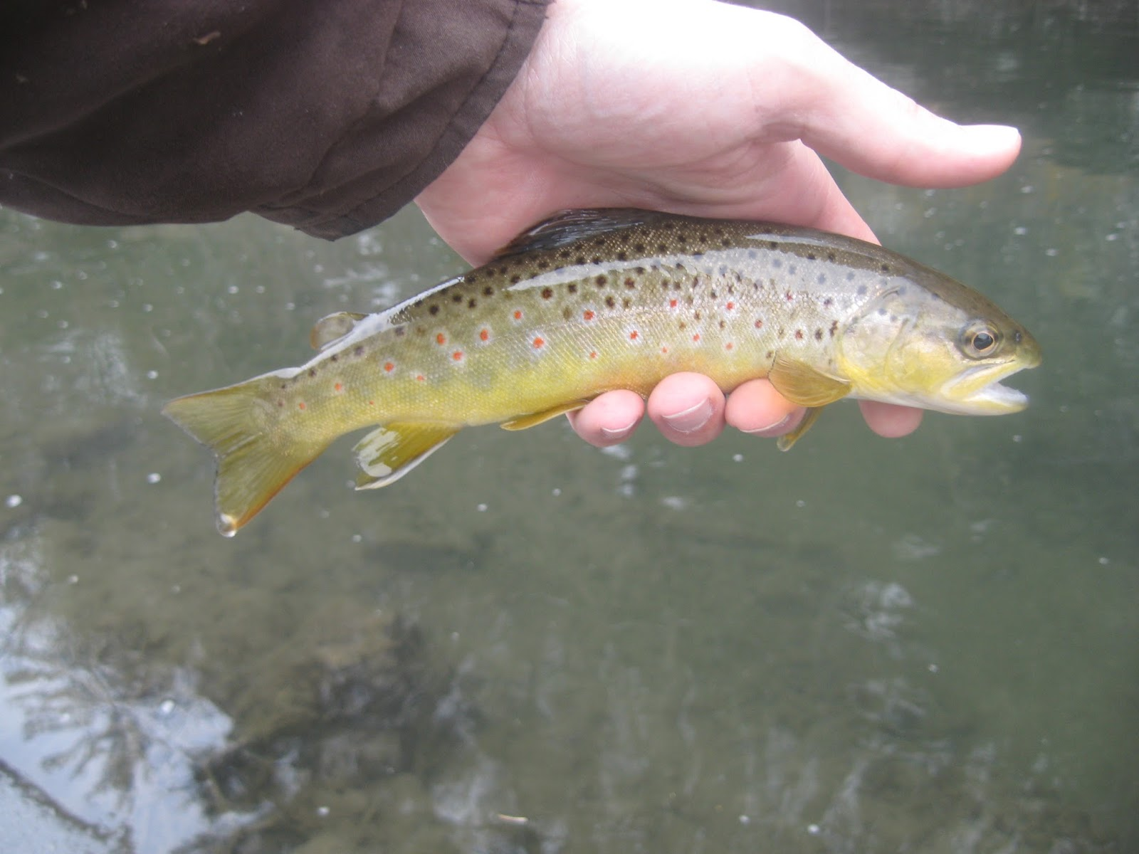 Minnesota driftless fly fishing trip report where the for Driftless fly fishing