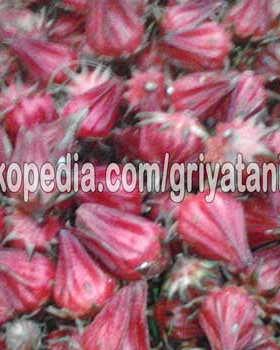Benih bunga Rosella Merah