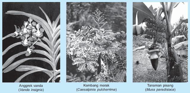 Pengertian dan Macam-macam Contoh Gymnospermae (Tumbuhan Biji Terbuka) dan Angiospermae (Tumbuhan Biji Tertutup)