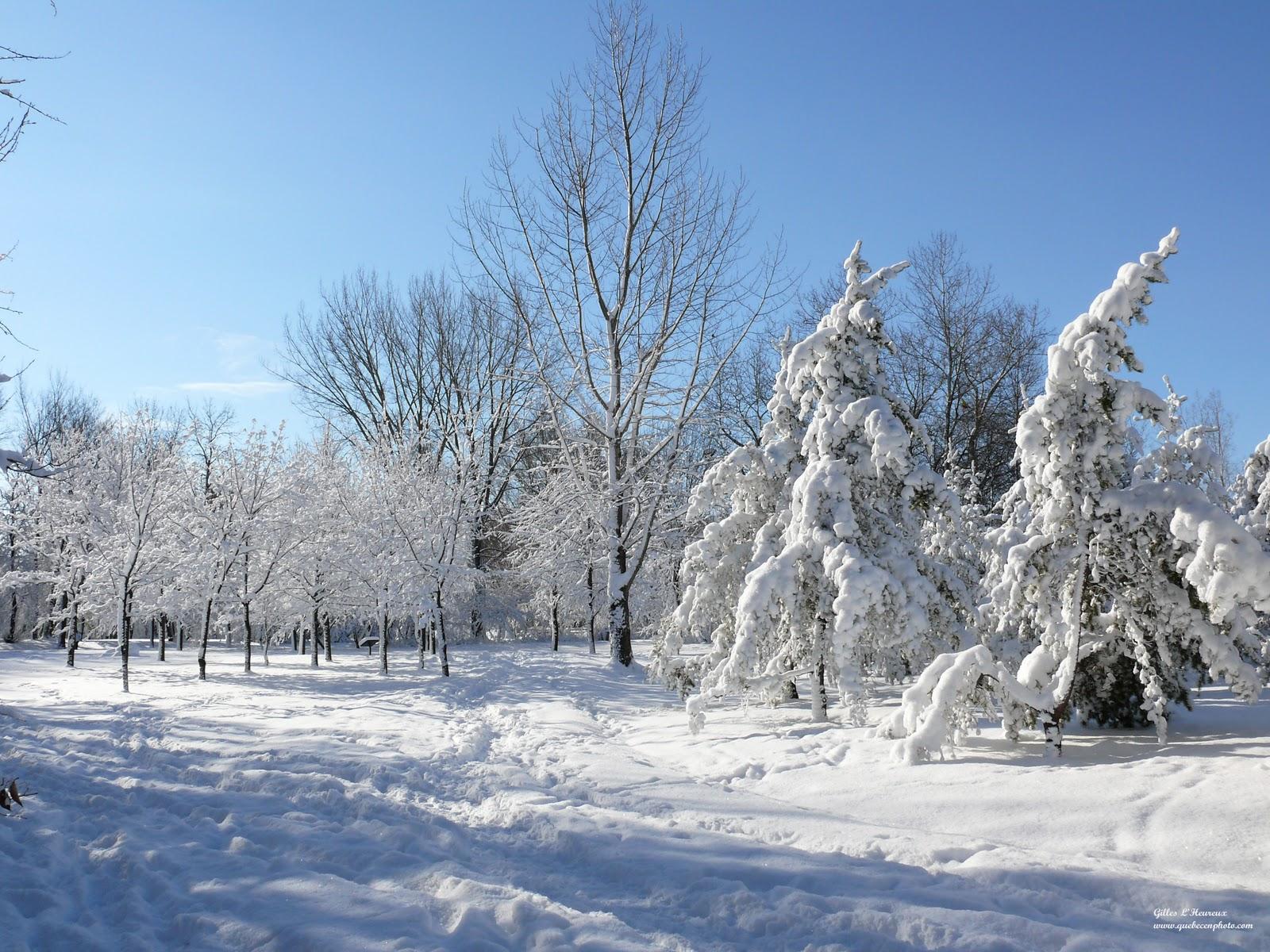 Paysage d'hiver québécois - Fonds d'écran HD