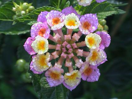 Color en el jard n todo el a o plantas que florecen en for Plantas exterior todo el ano