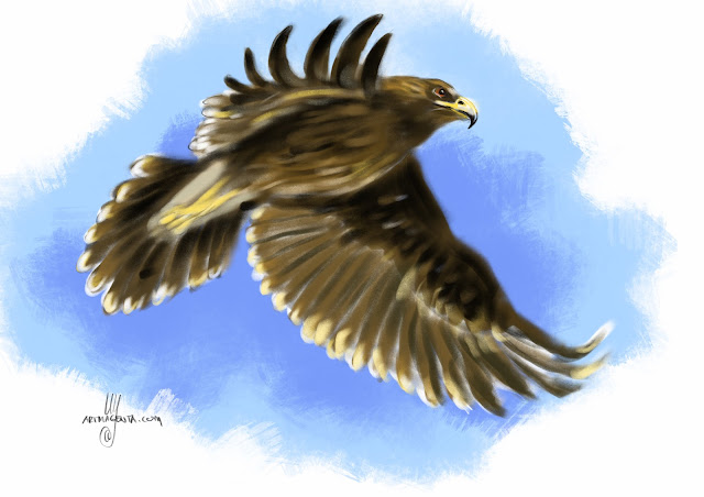 Greater spotted eagle bird painting by Artmagenta
