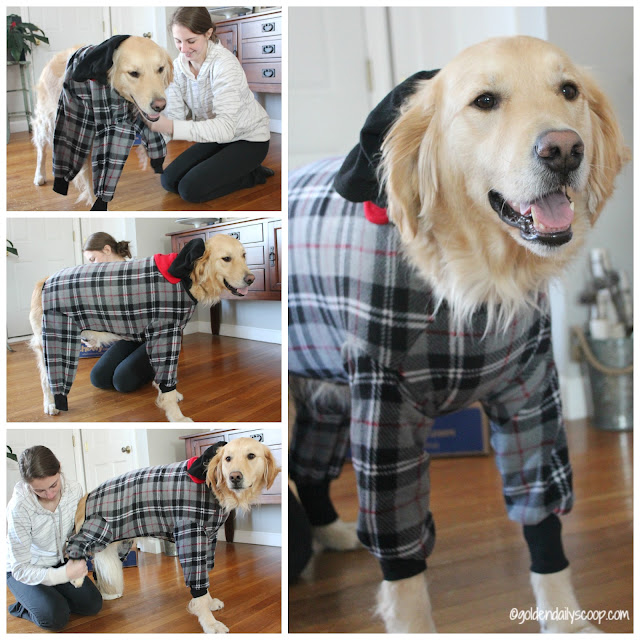 keeping dogs warm in the winter with a fleece coat