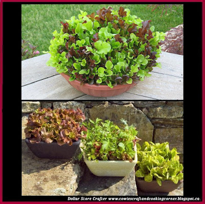 dollar store crafter how to grow lettuce in a pot video instructions. Black Bedroom Furniture Sets. Home Design Ideas