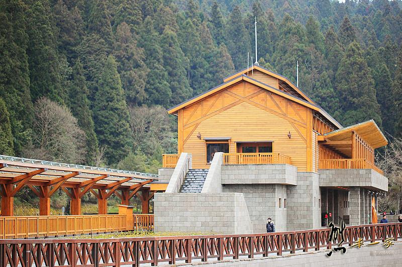 沼平車站|沼平公園櫻花季|嘉義阿里山國家森林遊樂區景點|阿里山櫻花季