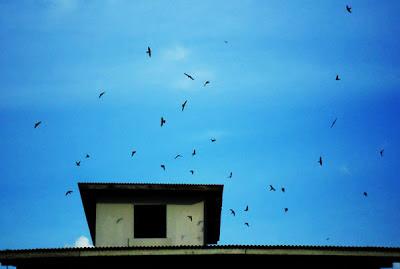 Cara Mengatasi Burung Walet Kita Lari atau Kabur Ke Gedung Lain