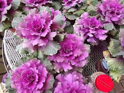 цветники,клумбы,сад
