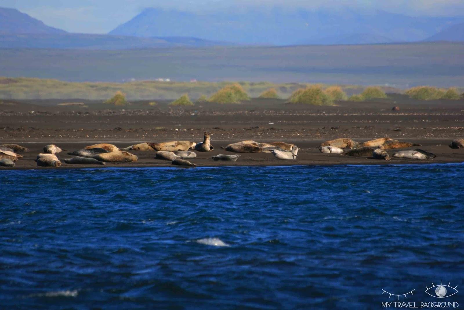 My Travel Background : 18 lieux à découvrir absolument en Islande, observer les phoques