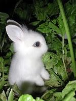 Gece yeşillikler için beyaz yavru tavşan