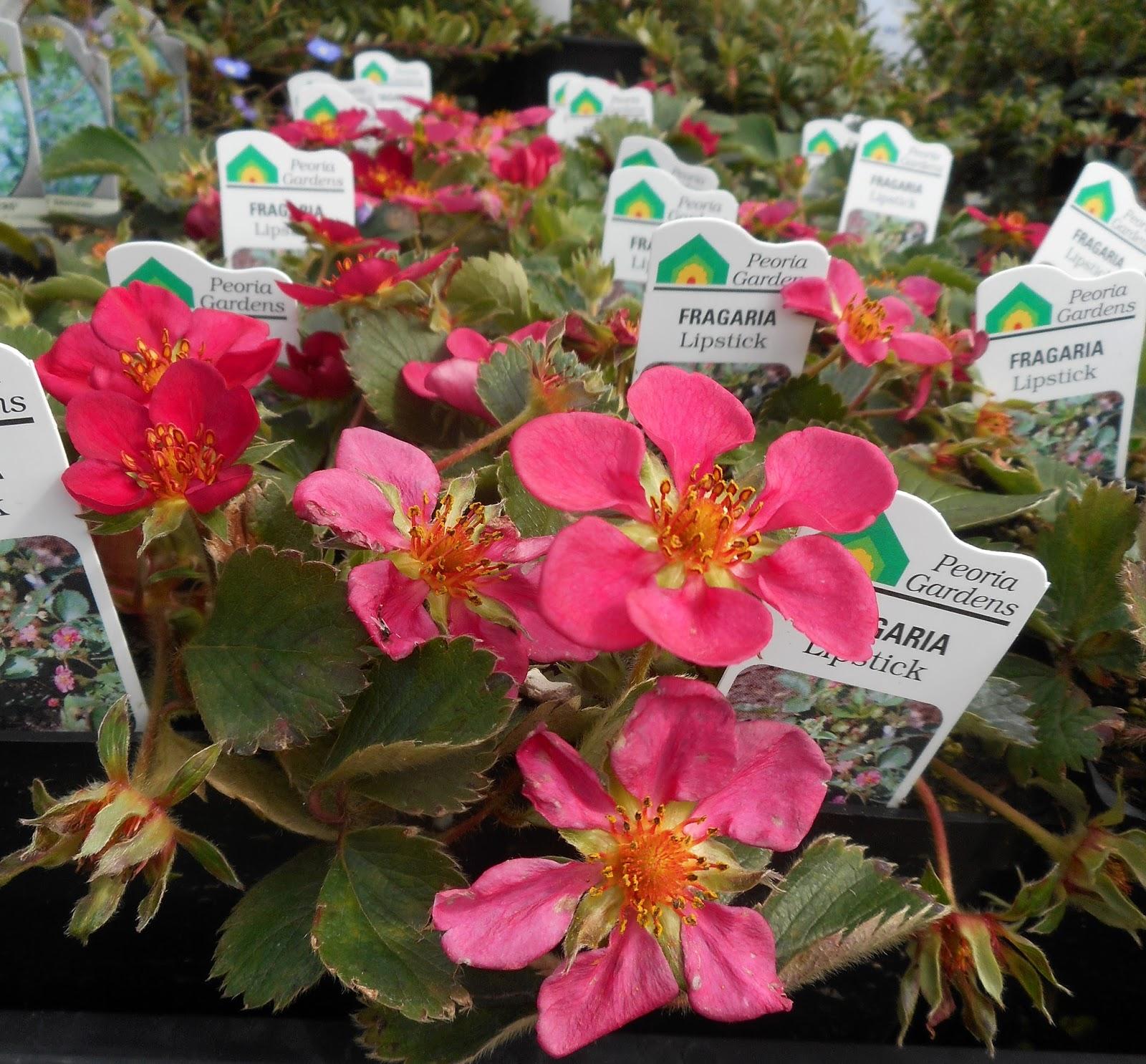 Gardening With Grace Nursery Jaunt Garland Nursery